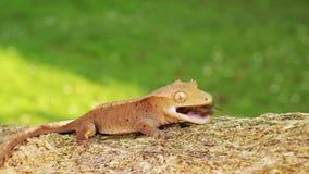 Salamandra almacen de video