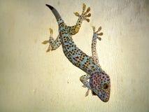 Salamandra colorida en una pared fotos de archivo libres de regalías