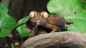 Salamandra de la hoja Fotos de archivo