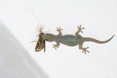 Salamandra de la pared Imágenes de archivo libres de regalías