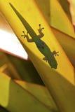 Salamandra del día del polvo de oro Foto de archivo