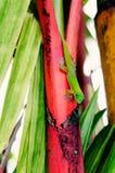 Salamandra del día del polvo de oro en bambú del arco iris fotografía de archivo libre de regalías