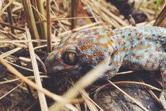 Salamandra en la hierba Imagen de archivo libre de regalías