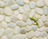 Salamandra en la pared de piedra Fotos de archivo