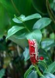 Salamandra en una planta Foto de archivo