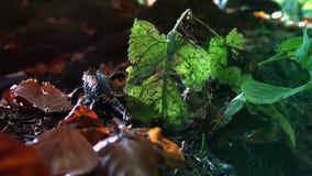 Salamandre repérée jaune dans la forêt sauvage, temps réel, banque de vidéos