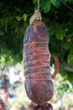 Salami calabrais typique de capicollo délicieux de salami Image stock