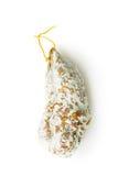 Salami savoureux avec le moule blanc Image libre de droits