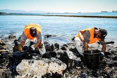 Workers try to clean up oil that has washed ashore, on a beach o stock photo