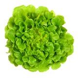Salanova从上面绿化橡木散叶莴苣在白色 免版税库存图片