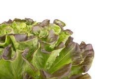 Salanova grönsallat på vit bakgrund Royaltyfri Bild