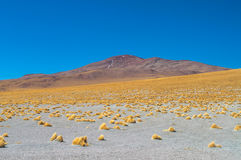 Salar Stock Photography