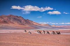 Salar Aguas Calientes, pustynny Atacama Obraz Stock