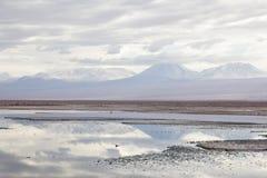 Salar Atacama Immagine Stock Libera da Diritti