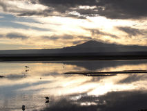 Salar De Atacama Zdjęcie Royalty Free