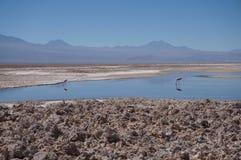 Salar de Atacama, Chile Stockfotografie