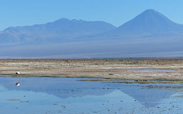Salar de Atacama, Chile Royalty Free Stock Photography
