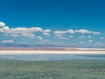 Salar de Atacama Laguna Chaxa Στοκ Εικόνα