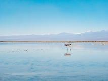 Salar de Atacama Laguna Chaxa Royalty-vrije Stock Afbeelding