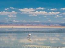 Salar de Atacama Laguna Chaxa Stock Fotografie