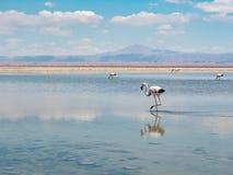 Salar de Atacama Laguna Chaxa Stock Afbeelding