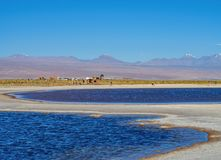 Salar de Atacama no Chile fotografia de stock royalty free