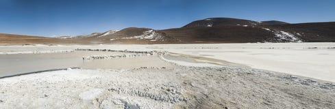 Salar de Chalviri, anche conosciuto come Salar de Ohalviri, è un sale piano nel cuore della riserva di Eduardo Avaroa Andean Faun Immagine Stock Libera da Diritti