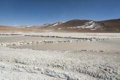 Salar de Chalviri, anche conosciuto come Salar de Ohalviri, è un sale piano nel cuore della riserva di Eduardo Avaroa Andean Faun Fotografia Stock
