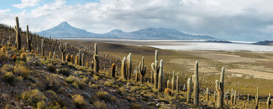Salar de Copiasa, Chile Royalty Free Stock Photography