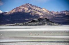 Salar de Surire, Chile Stock Photos