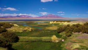 Salar de Tara Atacama öken, Chile Arkivfoton