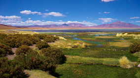 Salar de Tara, Atacama-Wüste, Chile Lizenzfreies Stockfoto