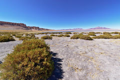 Salar de Tara Vegetation Image stock