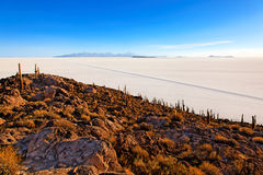 Salar de Uyuni, Bolivia. Cactus island in the Salar de Uyuni (Salt Flat), Bolivia Royalty Free Stock Photos