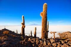 Salar de Uyuni, Bolivia. Cactus island in the Salar de Uyuni (Salt Flat), Bolivia Stock Images