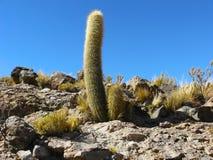 Salar de Uyuni, Bolivia. Immagini Stock