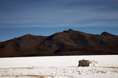 Salar de Uyuni, Bolivia. Landscape of Bolivia on the Salar de Uyuni stock photography