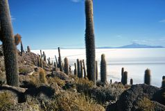 Salar de Uyuni in Bolivia,Bolivia. Island Pescado in Salar de Uyuni at Eduardo Avaroa National Reserve,Bolivia Stock Images