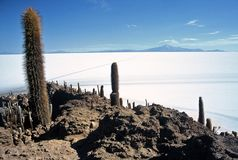 Salar de Uyuni in Bolivia,Bolivia. Island Pescado in Salar de Uyuni at Eduardo Avaroa National Reserve,Bolivia Stock Photography