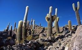 Salar de Uyuni in Bolivia, Bolivia Immagini Stock Libere da Diritti