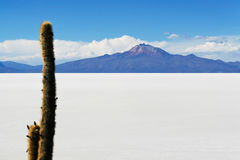 Salar de Uyuni in Bolivian Andes. The world largest salt flat in Bolivian Andes Royalty Free Stock Images