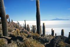 Salar de Uyuni em Bolívia, Bolívia imagens de stock