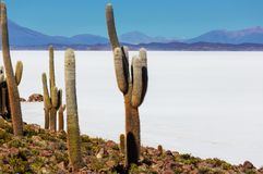 Salar de Uyuni Royalty Free Stock Photos