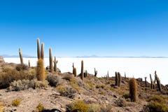 Salar de Uyuni-mening van Isla Incahuasi stock foto