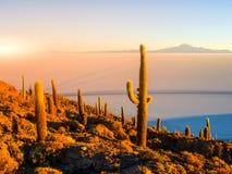 Salar de Uyuni-Salzebenen mit großen Kakteen von Insel Incahuasi zur Sonnenaufgangzeit, Anden-Altiplano, Bolivien, Süd lizenzfreies stockbild