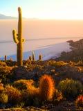 Salar de Uyuni-Salzebenen mit großen Kakteen von Insel Incahuasi zur Sonnenaufgangzeit, Anden-Altiplano, Bolivien, Süd lizenzfreie stockbilder