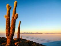 Salar de Uyuni-Salzebenen mit großen Kakteen von Insel Incahuasi zur Sonnenaufgangzeit, Anden-Altiplano, Bolivien, Süd stockfotos
