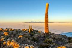 Salar de Uyuni-Salzebenen mit großen Kakteen von Insel Incahuasi zur Sonnenaufgangzeit, Anden-Altiplano, Bolivien, Süd stockbild