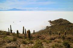 Salar de Uyuni sikten för lägenheter för världs` s den största salta från Isla Incahuasi, kaktusfältön i mitt av salta lägenheter arkivbilder