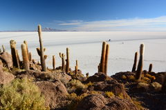 Salar de Uyuni view from Isla Incahuasi. Potosí Department. Bolivia. Isla Incahuasi is a hilly and rocky outcrop of land and former island in Bolivia situated Stock Photography